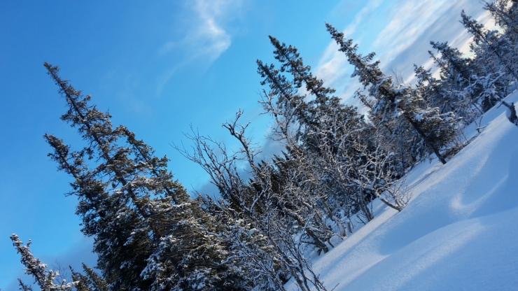 Skog med snö